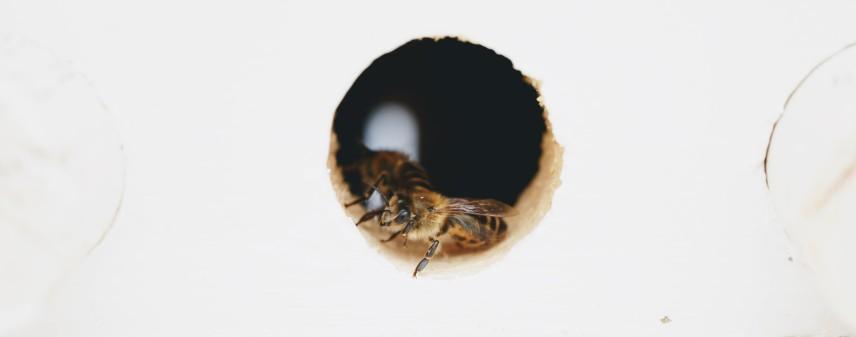 Selah's Bees: A Middle-Grade Novel